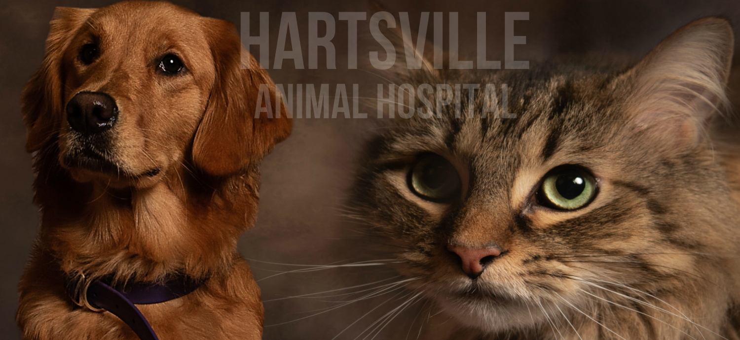 Veterinary ❤️ Hartsville Animal Hospital